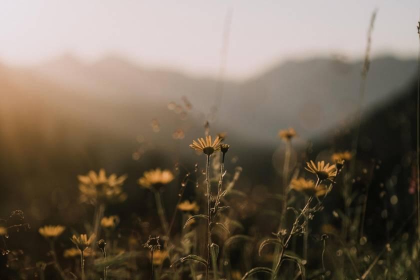 Benediktenwand Blumen