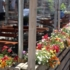 A blossoming Schanigarten in the Maxvorstadt district ...