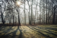 The wintry alluvial forest of the Isar is filled with sunlight.