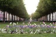 In springtime, Bordeauxplatz is an oasis in the middle of Haidhausen.