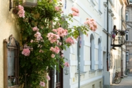 Spring can be discovered everywhere in the city - also on this flowering wall of houses.