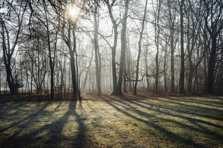 The sun shines through the wintry alluvial forest of the Isar.