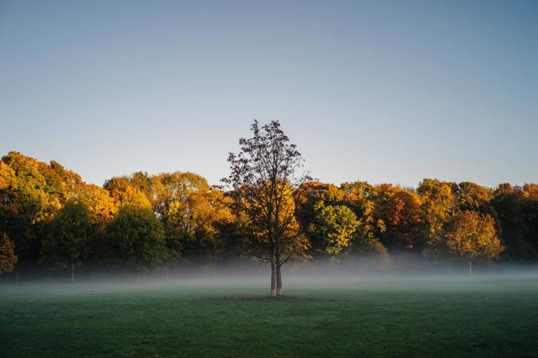 Morning atmosphere during autumn in the Englischer Garten in Munich